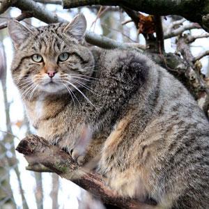 گربه در کویر خارتوران