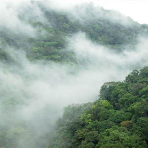 تور جنگل ابر شاهرود