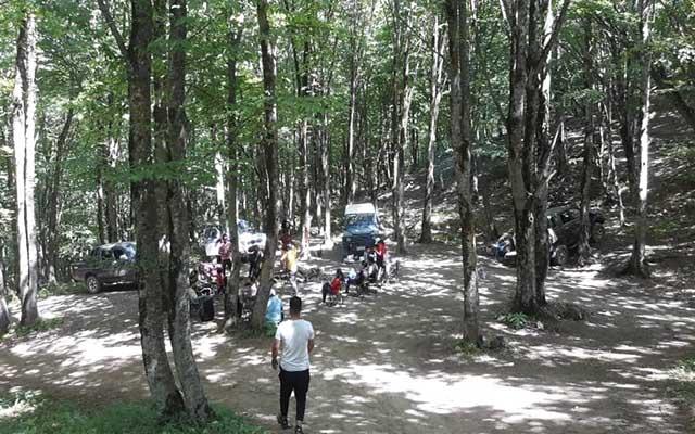 جنگل ابرشاهرود